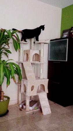 rascador gato gatos