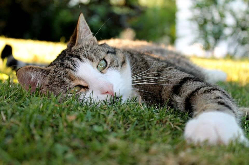¡Cuidado con el sol! 6 trucos para que tu gato pase un buen verano