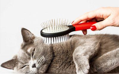 En verano, cepilla a tu gato para ayudarle a superar el calor