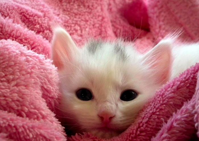 El peso promedio del gatito desde su nacimiento hasta los 4 meses de vida