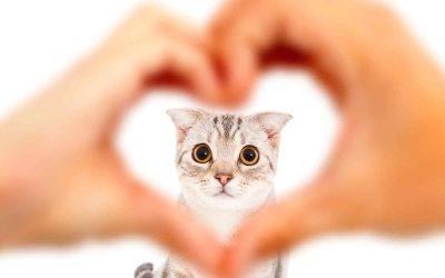 Problemas cardíacos en gatos