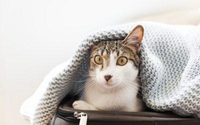 ¿Cómo saber si mi gato tiene frío?