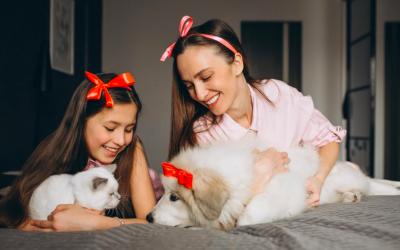 El gatito pequeñito llega a casa por primera vez y hay otras mascotas ¿Qué hacer?