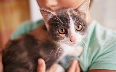 La convivencia entre niños y gatos