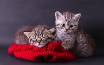 ¿Cómo introducir un nuevo gatito en casa si ya tienes otro gato?