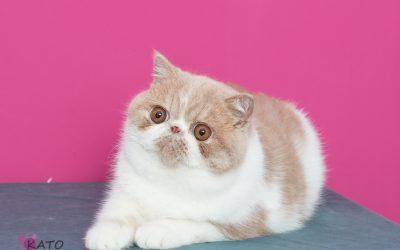 Enamórate de tu gato IV edición