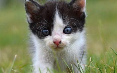 Cómo puedo saber que mi gato tiene alergia: 3 síntomas