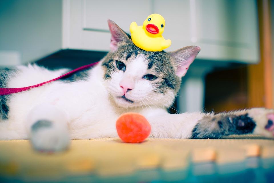 Bañar a tu gato, ¿sí o no?