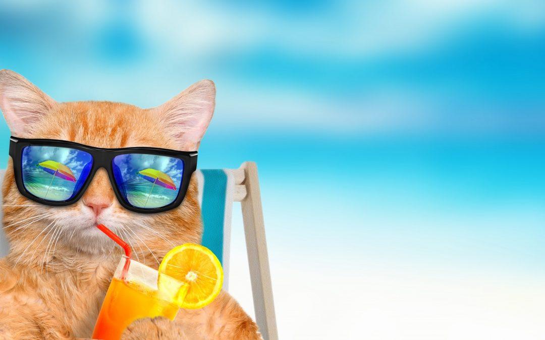 Cómo irte de vacaciones con tu gato en verano