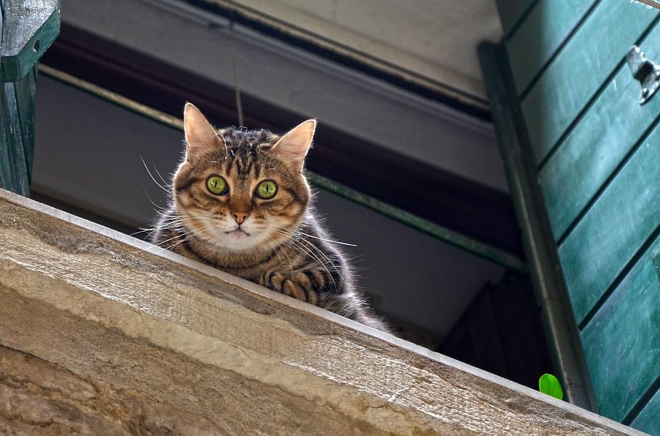 ¡Cuidado con los gatos paracaidistas!