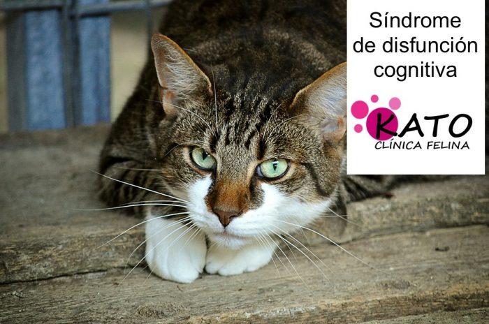 Síndrome de disfunción cognitiva en gatos (SDCG)
