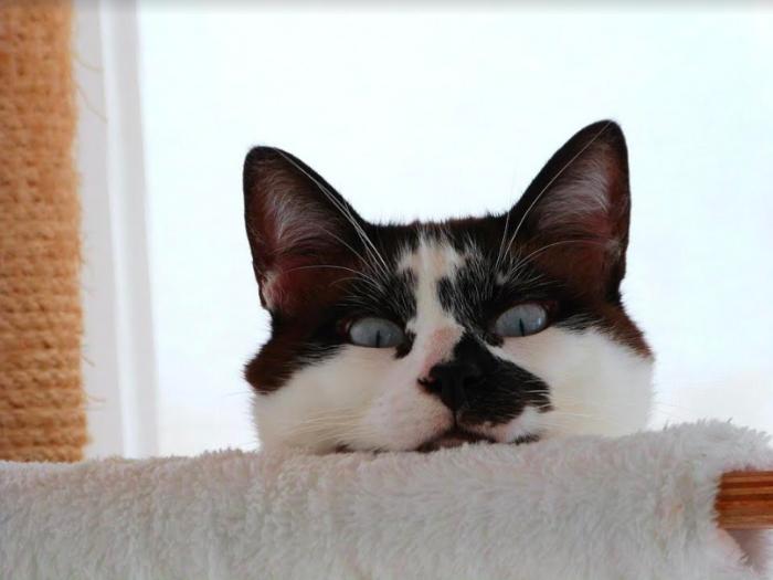 5 errores que cometes y hacen que tu gato engorde sin darte cuenta