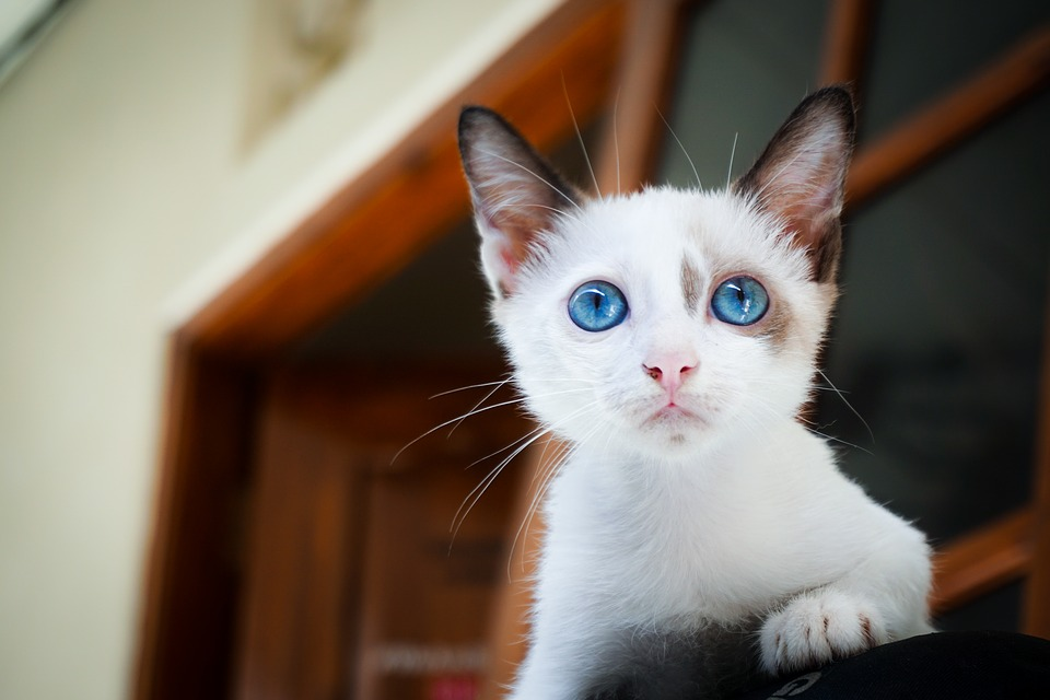 ¿Tienes un gatito pequeñito? Aliméntalo bien
