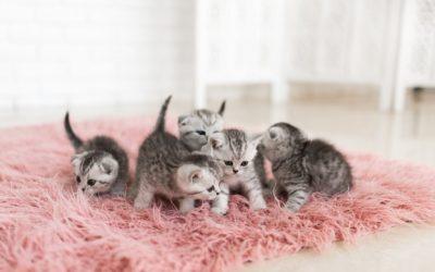 ¿Conoces el Síndrome del Gatito Desvanecido?