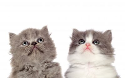 Mi gato y las alergias alimentarias
